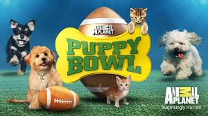 "Animal Planet's ""Puppy Bowl"" helps shelter puppies find ""forever homes"""