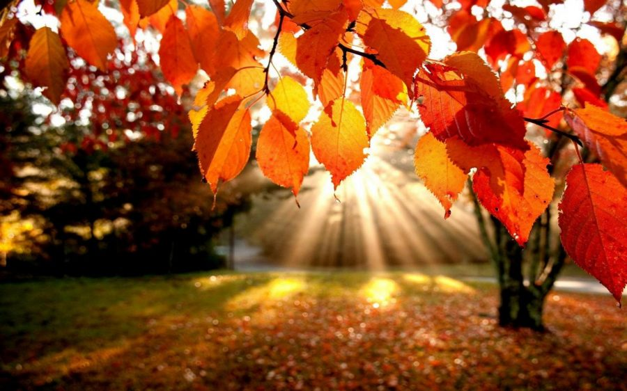 Fall into fall: the most alluring season