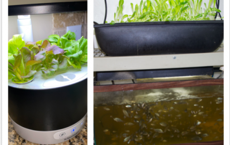 Mr. Reich growing produce with hydroponics and aquaponics