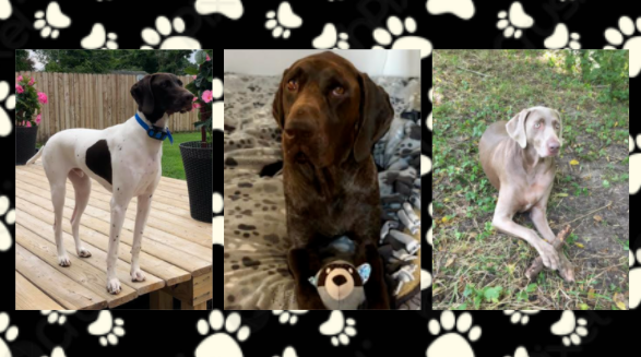 "Fuzzy Friend Feature: Mrs. Isaacs's ""children"" Bentley, Finn, and Sophie"