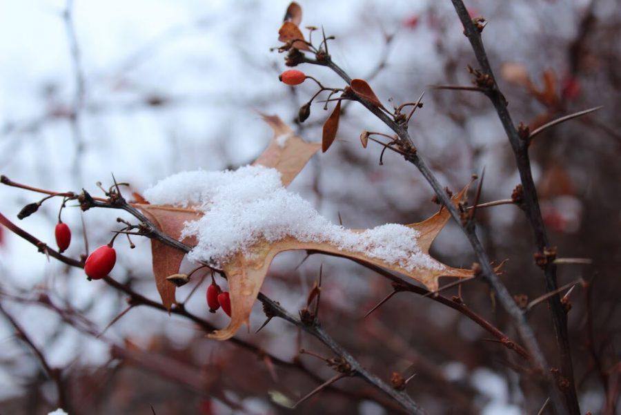 Art Ideas From The Winter Season