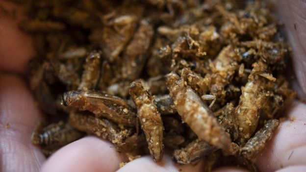 Last year, the Spanish Club was able to try different food from Spanish speaking countries, such as crickets from Peru.