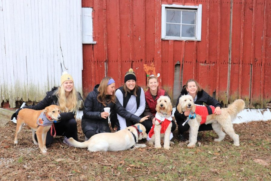 A group shot of all the beautiful dogs that joined the race last year!